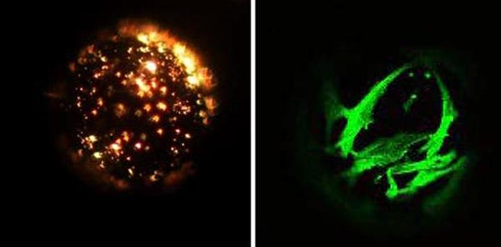 澳州科学家使用微小的珠粒来生长干细胞,用于生物3D打印软骨 - 图片