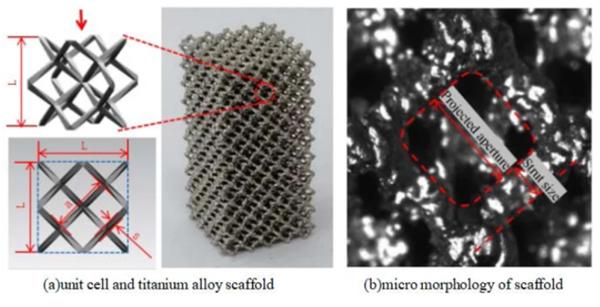 我国研究人员测试模仿骨小梁结构的钛合金生物3D打印支架 - 图片