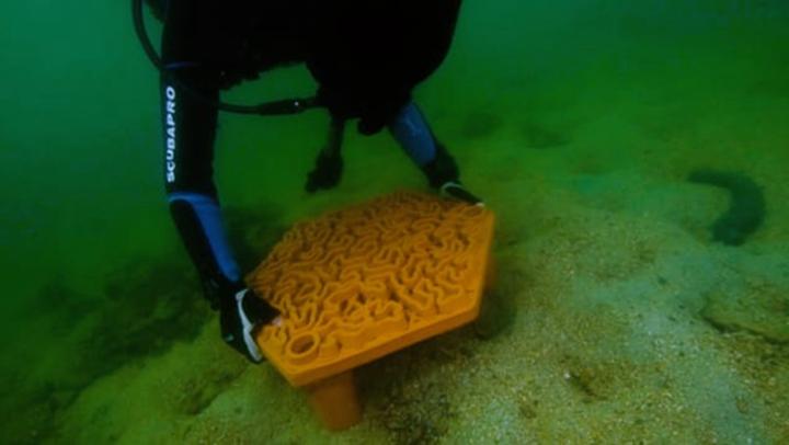 瓷砖上长出的珊瑚礁,看3D打印如何帮助拯救香港的珊瑚礁