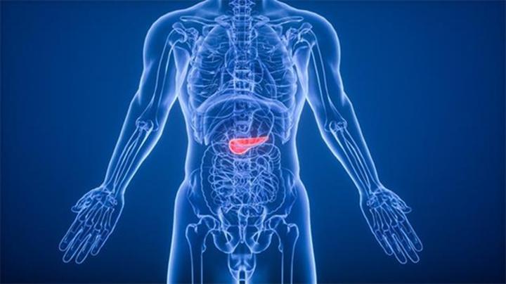 3D打印技术创建人体器官图,可用于研究糖尿病或其他疾病
